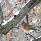 Snowy day birdie by Alberto  DeJesus