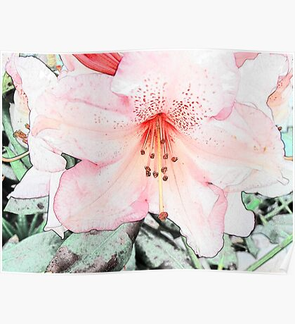 Pink rhododendron, azalea flower photo art. color pencil sketch style. Poster
