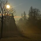 Misty morning fog, Hyde Park, London, England by Pete Johnston
