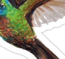 Hummingbird Sue Sticker