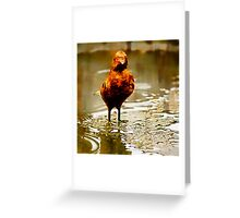 Where are my feathers? Greeting Card