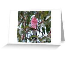 YOU looking at ME ......... Greeting Card