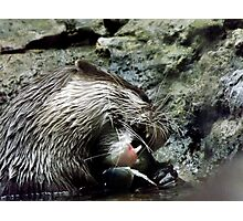 Otterly delicious Photographic Print