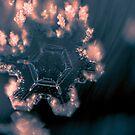 Festive Snowflake by Zohar Lindenbaum