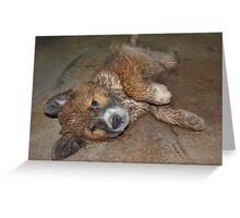 Shower me Greeting Card