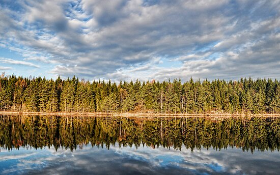 Reflect by Mark Williams