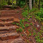 Staircase in the dirt by Scott Mitchell