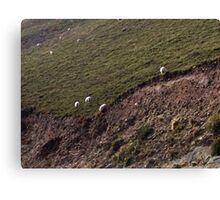 Sheep on the hillsides, Ireland Canvas Print
