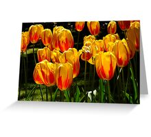 Tulip Balloons Greeting Card