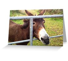 Donkey in Kerry, Ireland Greeting Card