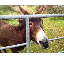 Donkey in Kerry, Ireland Photographic Print