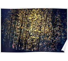 Dark Ambient Forest Poster