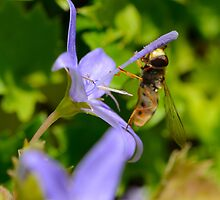 Hoverfly by wraysburyade