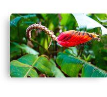 Floral Viper Canvas Print