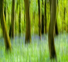 Spring Woods in Abstract by Nick Jenkins