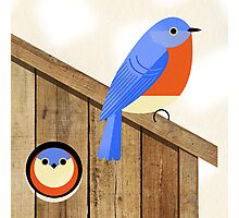 blue bird house Photographic Print