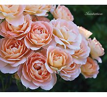 Rose: Invitation - Summer Dream  by RosySue