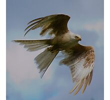 Albino Kite Photographic Print