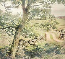 Under The Greenwood Tree by patrixpix