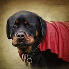 Rotweiller with cape by vigor