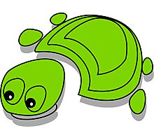 Green Tortoise Photographic Print