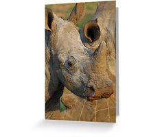 Young white rhino Greeting Card