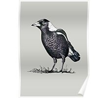 Magpie - Dedicated to family Poster