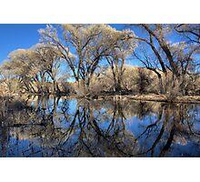 Liquid Forest Photographic Print