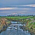 Swan Swam by Dave Godden
