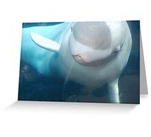beluga 1 Greeting Card
