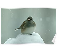 Dark-Eyed Junco in the Snow Poster