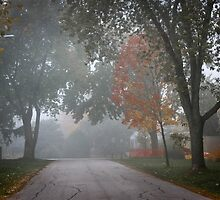 Fall road with trees in fog by Elena Elisseeva