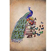 Vintage Peacock Beauty Photographic Print