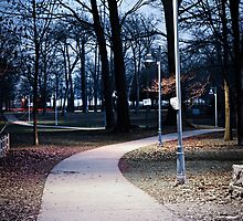 Park path at dusk by Elena Elisseeva