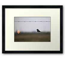 Eastern Phoebe On Barbed Wire Framed Print