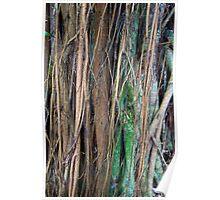 Layered Tropical Limbs  Poster