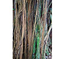 Layered Tropical Limbs  Photographic Print