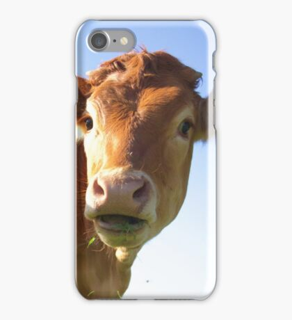 nosey cow iPhone Case/Skin