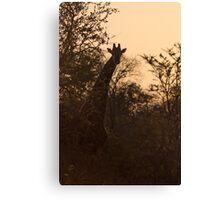 Giraffe at Dusk Canvas Print