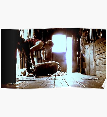 Shearing Time  Poster