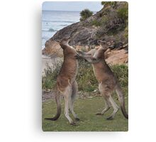 Boxing kangaroos on the beach Canvas Print
