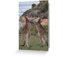 Boxing kangaroos on the beach Greeting Card