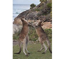 Boxing kangaroos on the beach Photographic Print