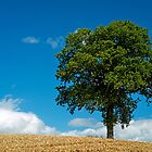 Tree in Wheatfield by Nick Jenkins