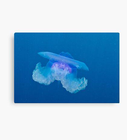 Blue Crown Jellyfish Canvas Print