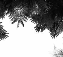 """The Tree Top"" by Tal Paz-Fridman"