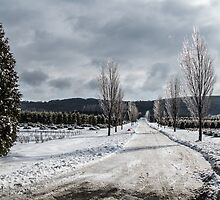 The Road to Christmas by Dennis Maida