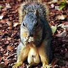 Packin Nuts by Loree McComb