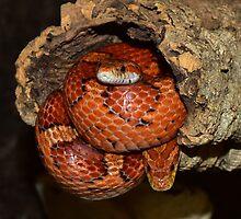 Snakes by franceslewis