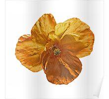 Poppy flower head. Poster